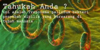 bakteri penyait sipilis