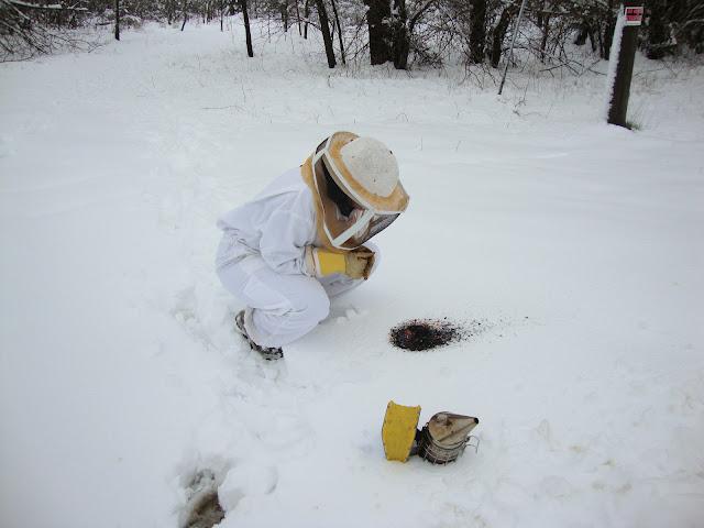 Ο ρόλος της θερμοκρασίας στην ζωή των μελισσών!!!
