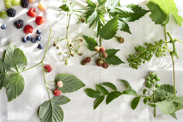 Jardines veganos...con frutas trepadoras.
