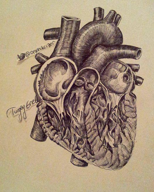 Kalp Cizimi