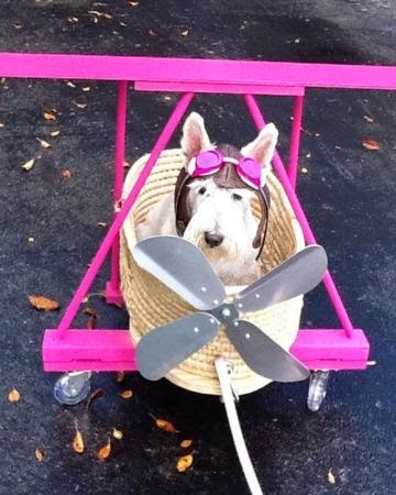 The Villa Alphie: Dog Costumes | Halloween 2014