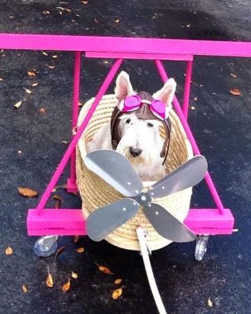 The Villa Alphie: Dog Costumes | Halloween 2014