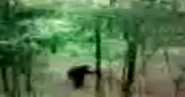 Bigfoot Evidence: Watch: Nady, Arkansas Bigfoot? [Warning ... | 624 x 328 jpeg 18kB