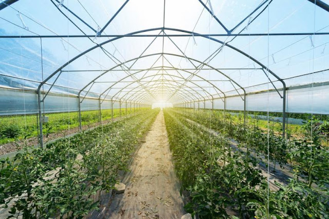 The Benefits of Gardening with a Greenhouse You Need to Know