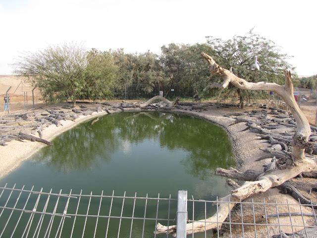 חוות תנינים - קרולוקו