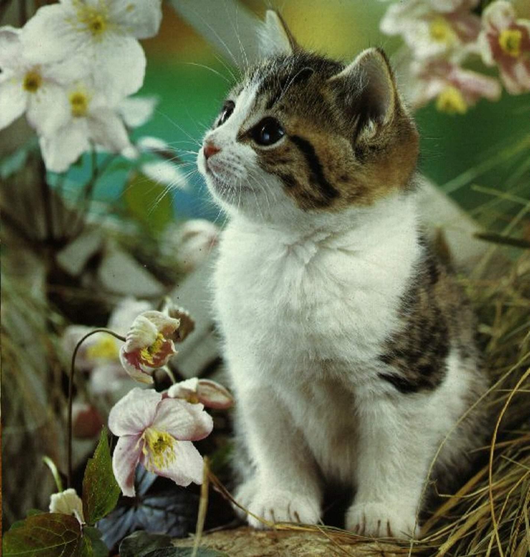 Foto Kucing Kucing Imut Lucu