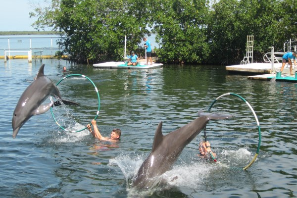 Tourist Attraction in key largo florida