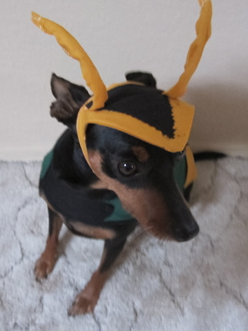 Loki Pet Vest Costume | Custom Made Pet Vests
