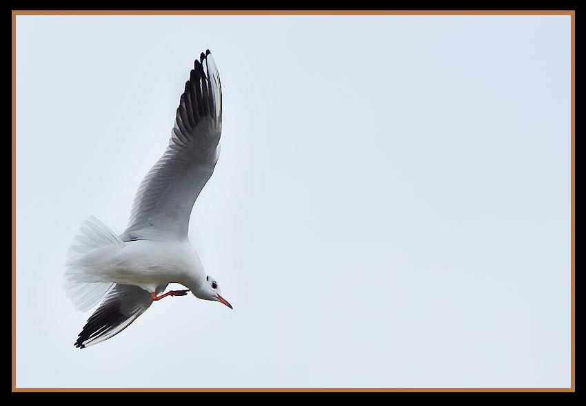 Wildlife gateway 1000 pattes h ron crabier en plumage for Koi qui se gratte