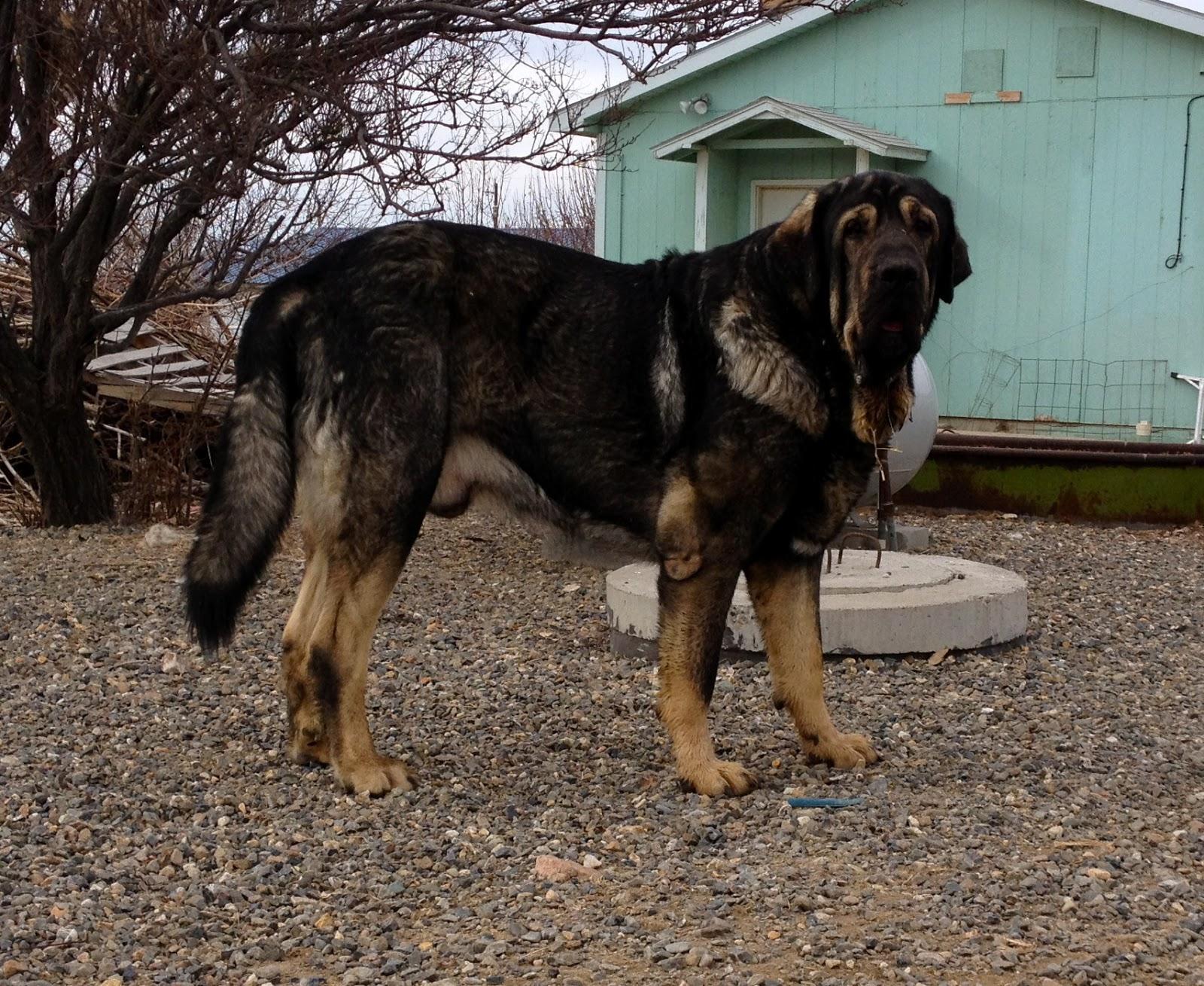 Livestock Guardian Dog Blog by Brenda M. Negri: February 2016