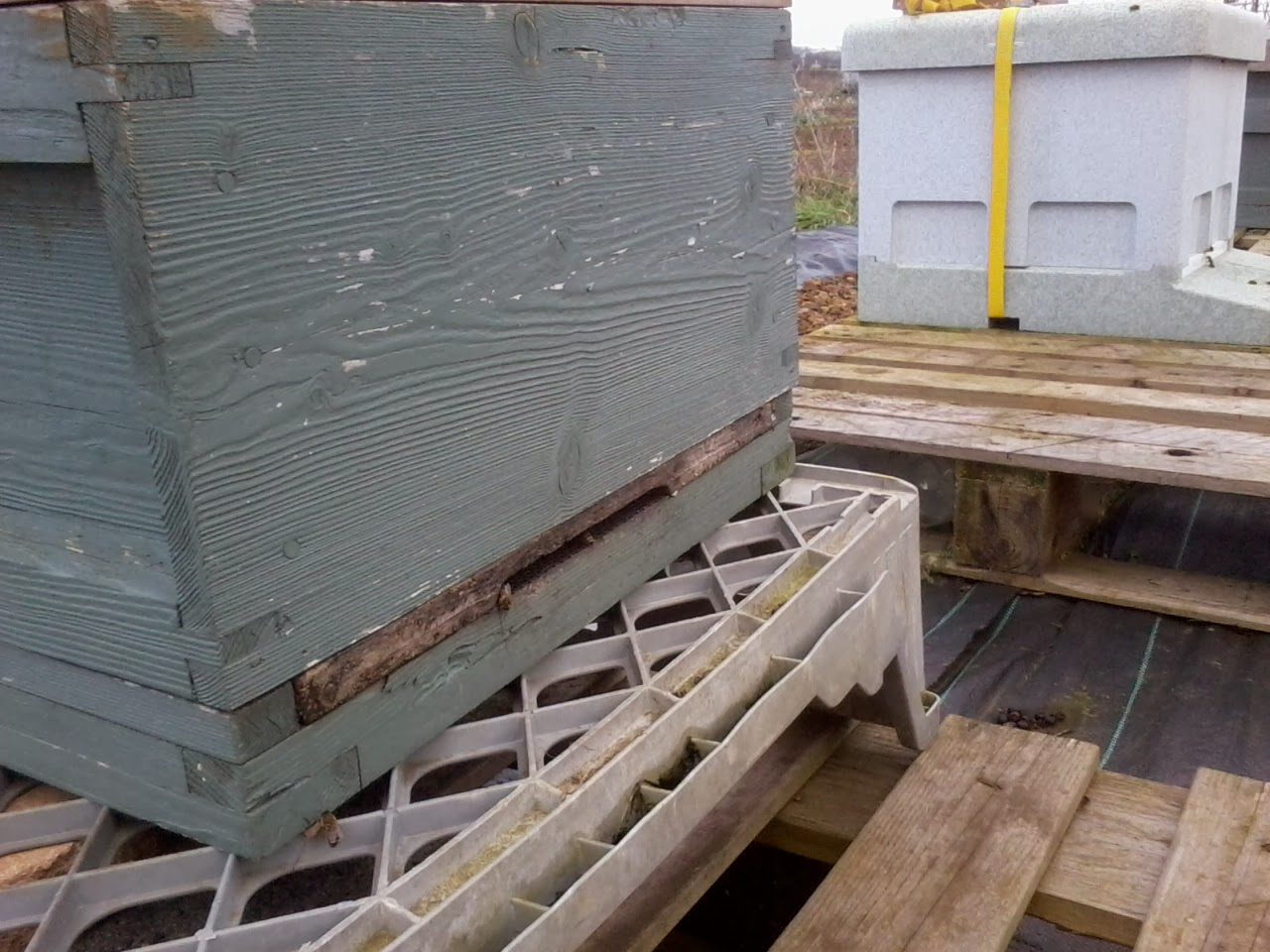 Not quite as enthusiastic as the other two hives about the sunshine.