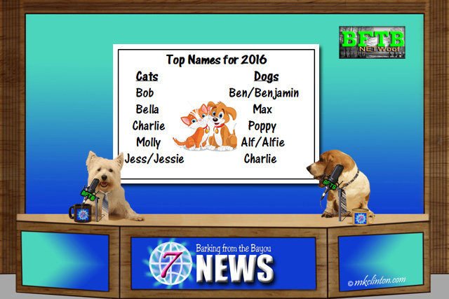 BFTB NETWoof News with top dog & cat  names for 2016