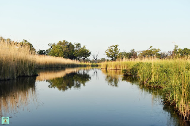 Reserva de Moremi de Botswana