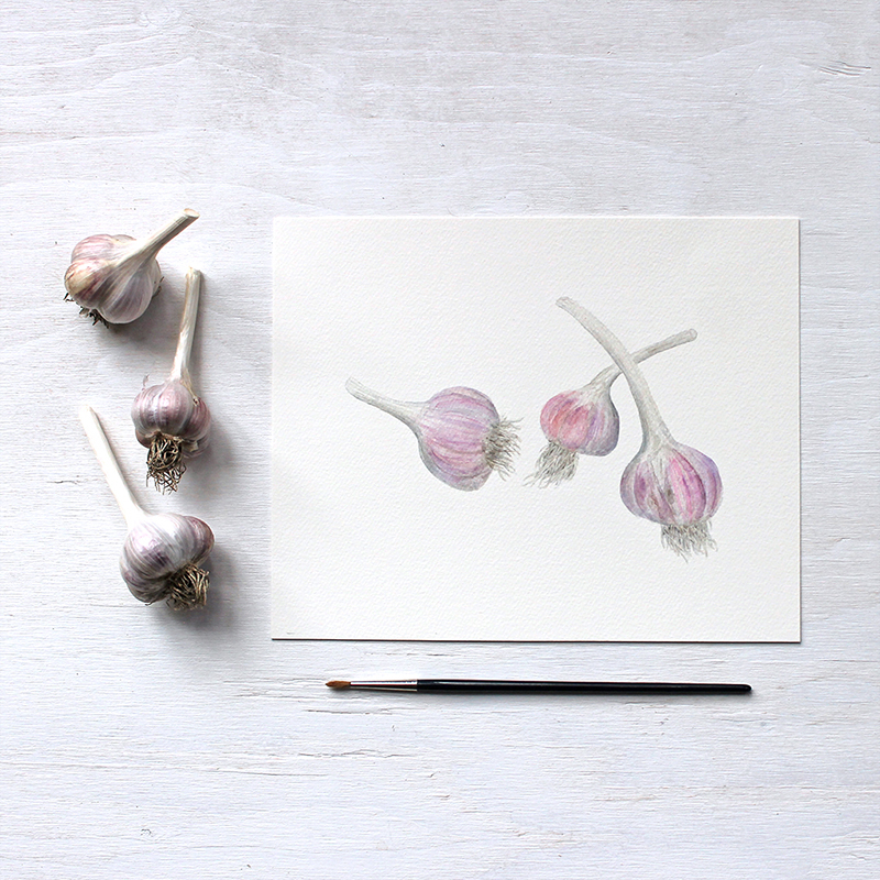 Garlic art print by Kathleen Maunder
