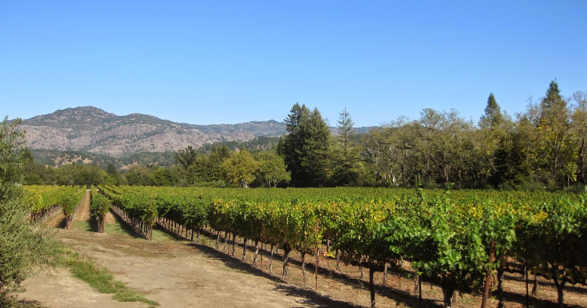 Cheap Wine Tours From San Francisco