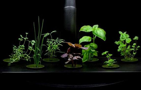 Herb and Vegetable Gardening Basics