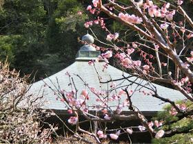 梅・瑞泉寺