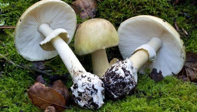 Muere segunda integrante de una familia por comer hongos