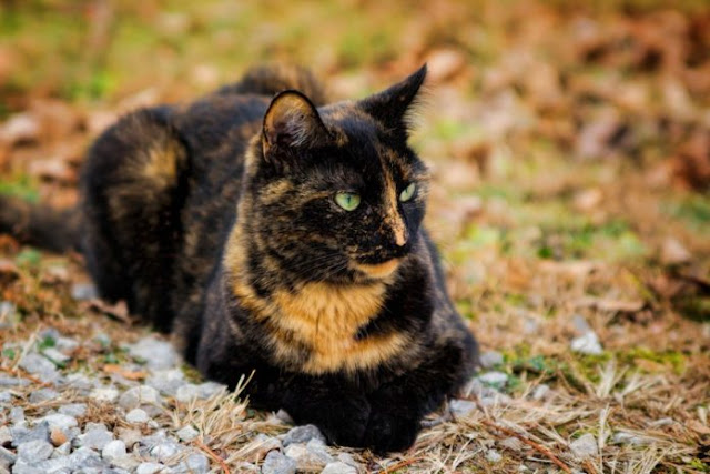 CATS – Protect You And Your Home From Ghosts And Negative Spirits 5