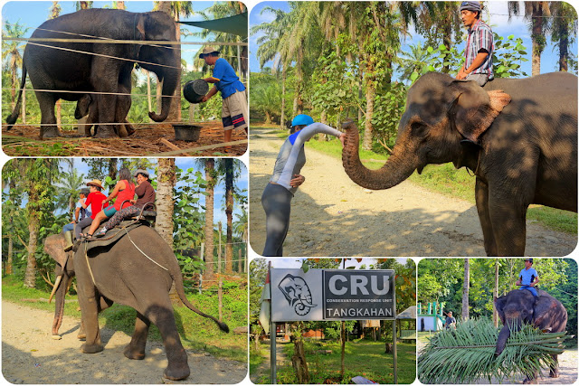 Gajah Tangkahan Sumatera