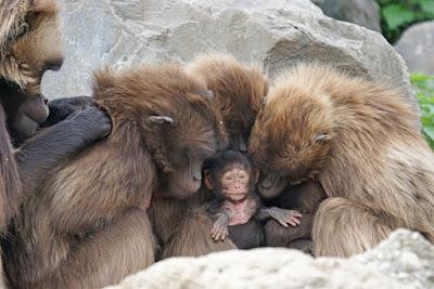 Familia de primates