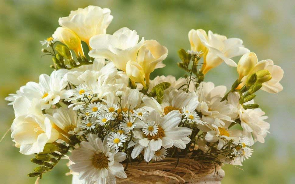 white-beautiful-blooming-sweet-flowers