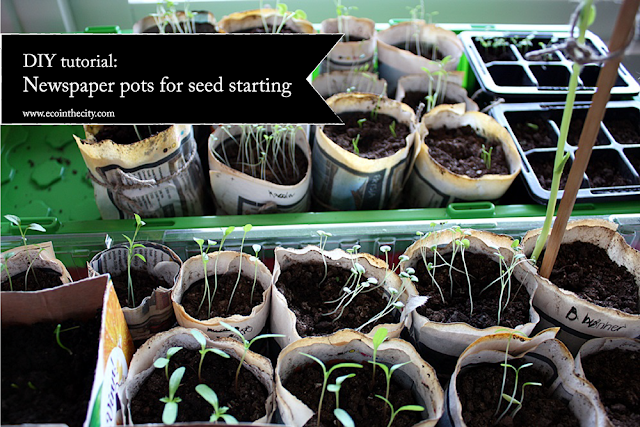 Re-use old newspaper and make seed starters
