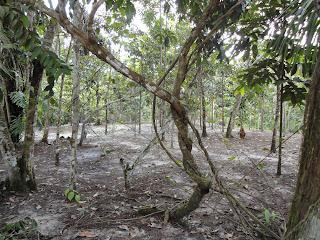ayahuasca plantas maestras - iquitos - Peru