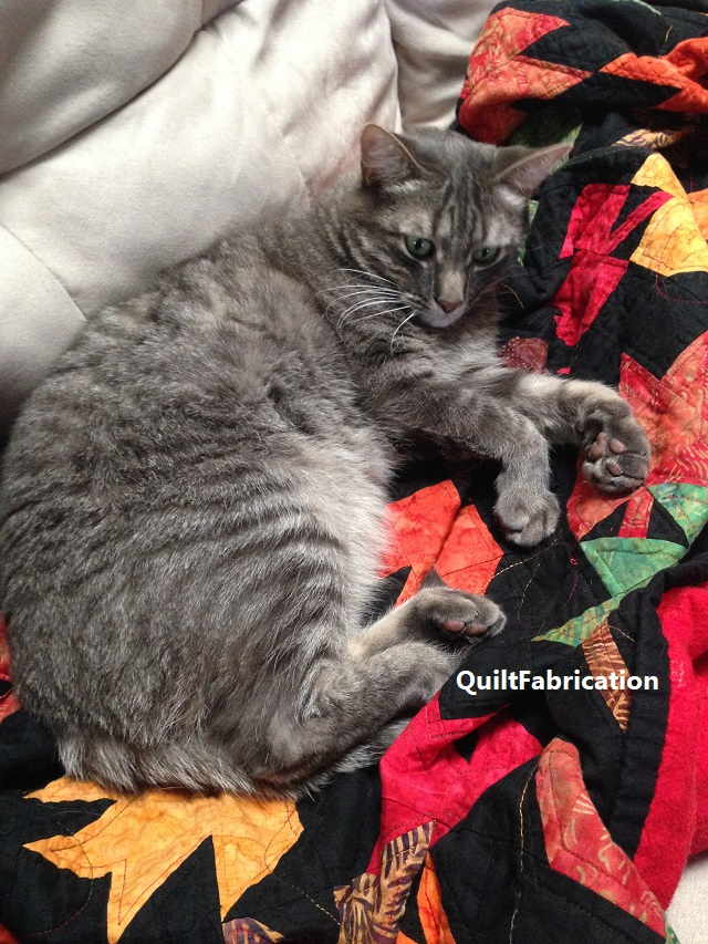Toby lounging on the maple leaves quilt