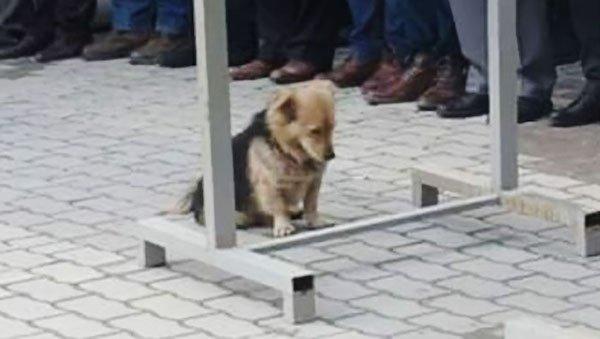 Perrito devastado se rehúsa a separarse de su difunto dueño