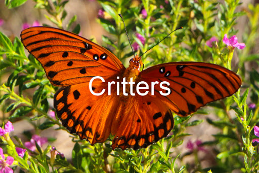 Critters Gallery