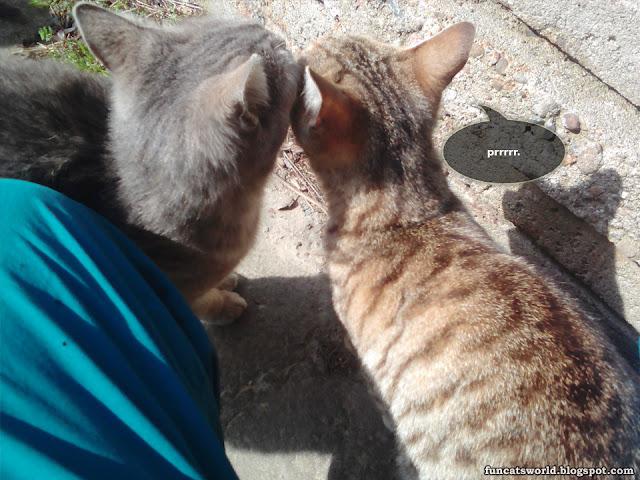 Cats Prrrr