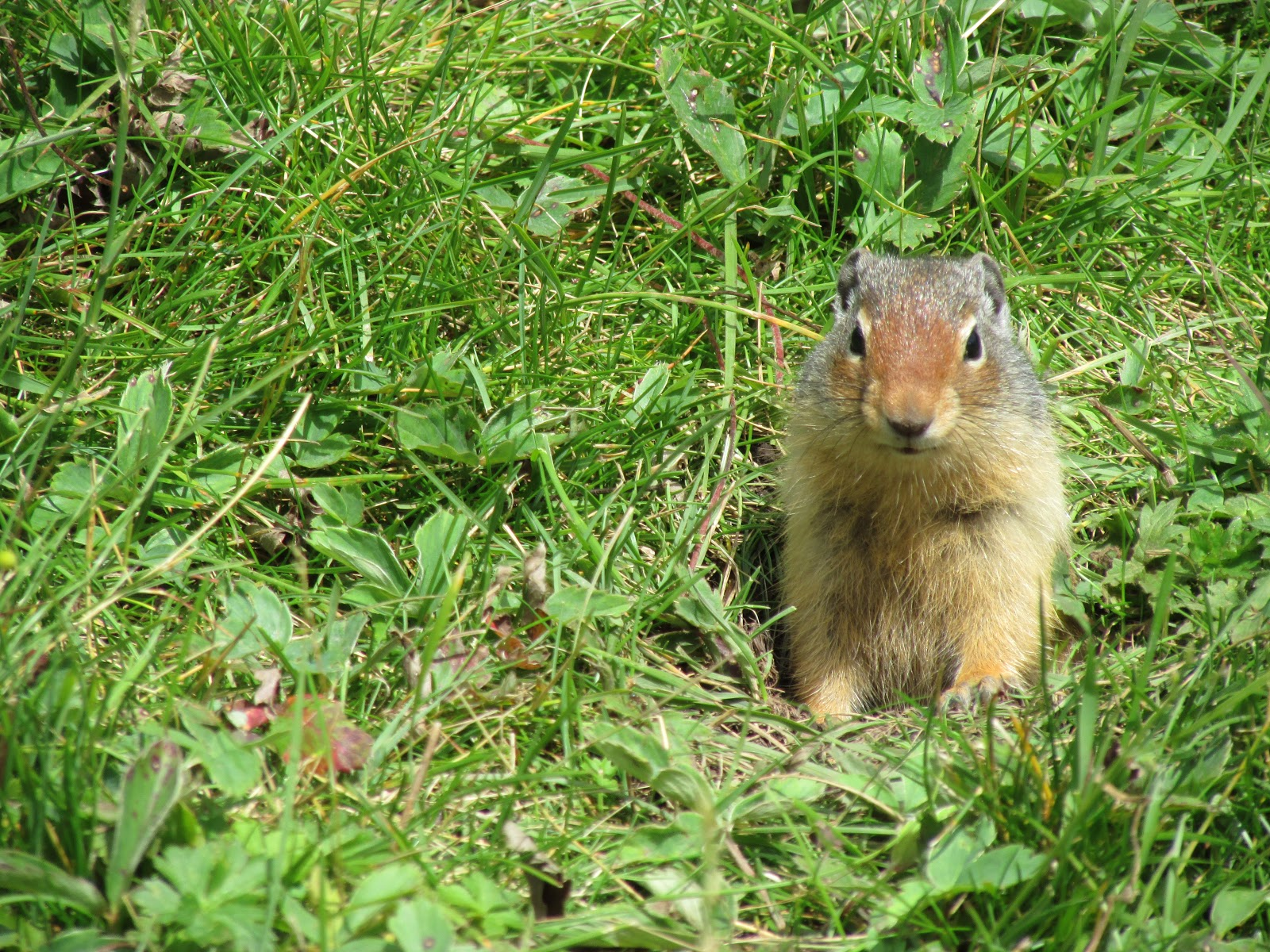 Little Ground Squirrel | Akinokiki