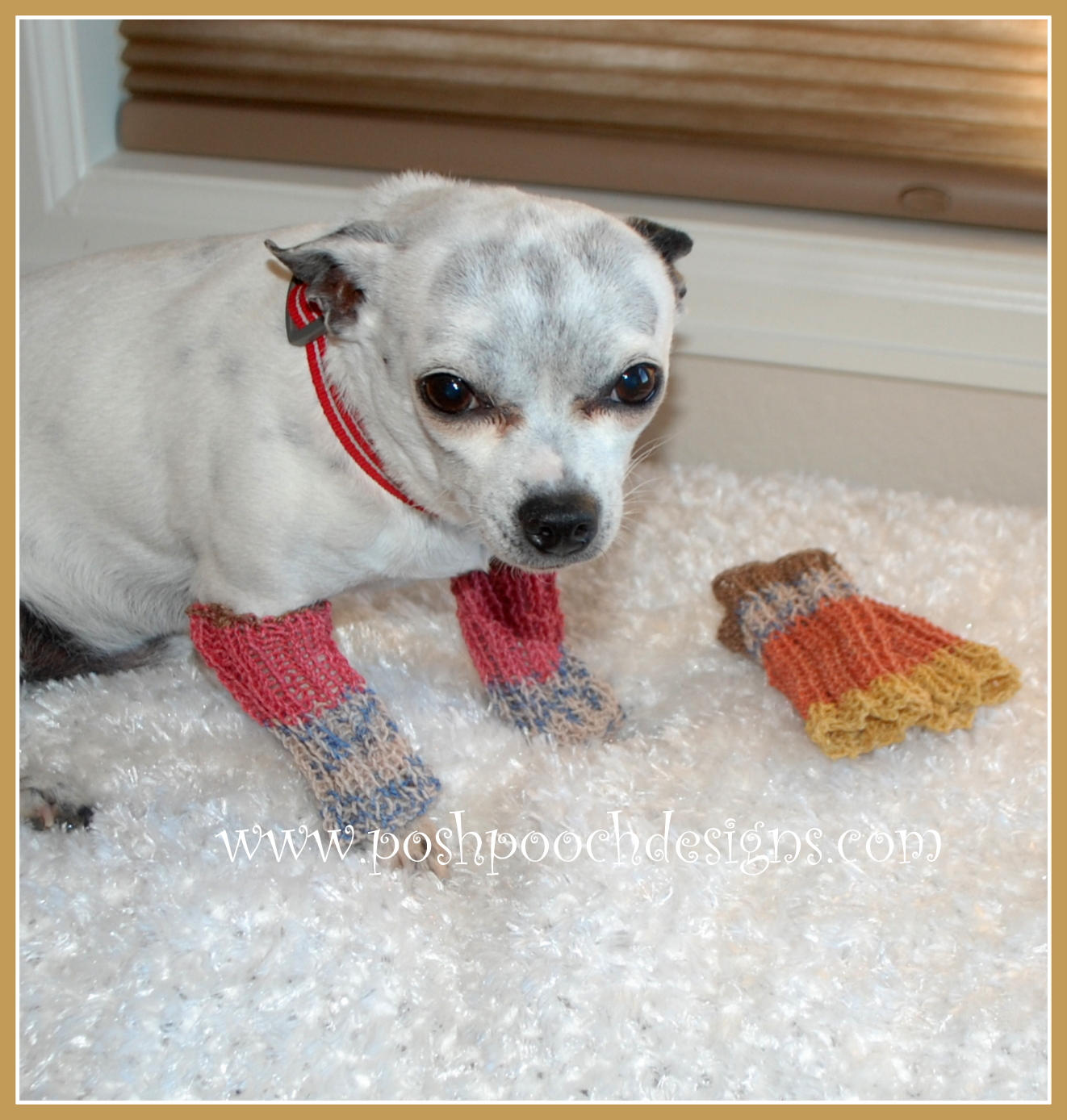 Posh pooch designs dog clothes leg warmers for your dog free and keep his legs warm bankloansurffo Images