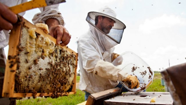 Αντιβακτηριακή δράση Ελληνικών μελιών και σύγκριση με το μέλι manuka!!