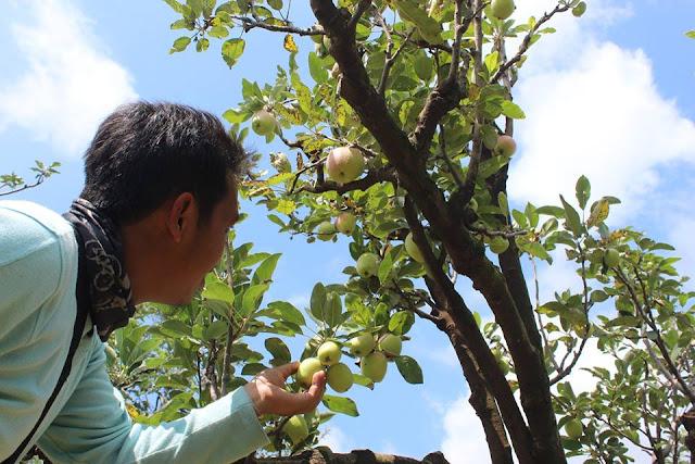Wisata Perkebunan Apel Kota Batu, Malang Jawa Timur