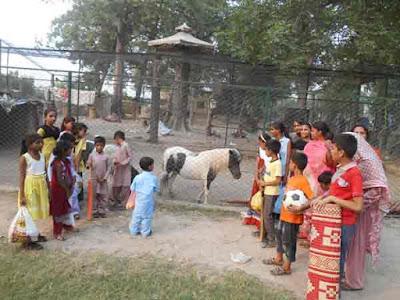 Zoo in Faisalabad Pakistan