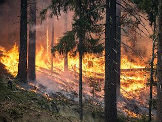 Το ΕΠΑΜ για τις πυρκαγιές που κατακαίουν την Ελλάδα