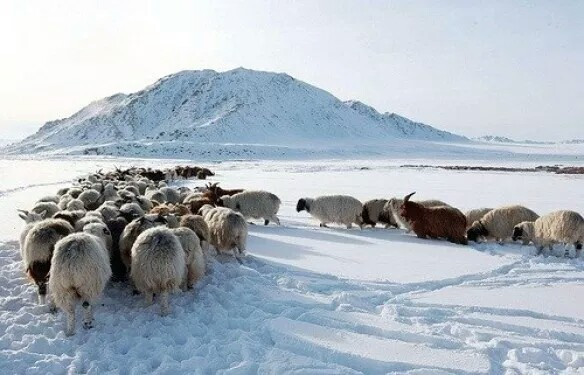 Mongolia coldest country