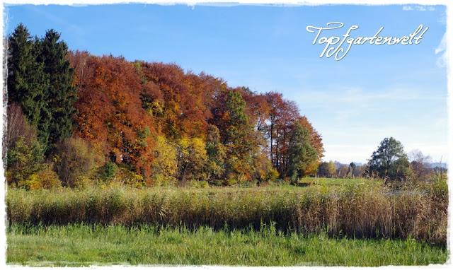 Egelseen Herbststimmung