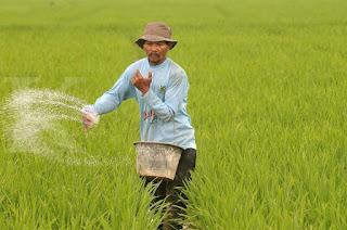 Aceh Utara Butuh 16.000 Pupuk Untuk Petani