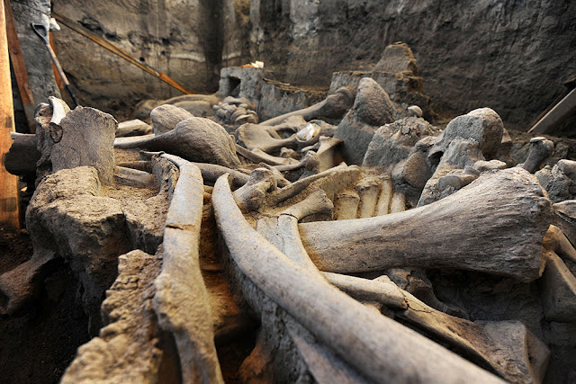 Mexican paleontologists recover most of mammoth skeleton from Pleistocene era