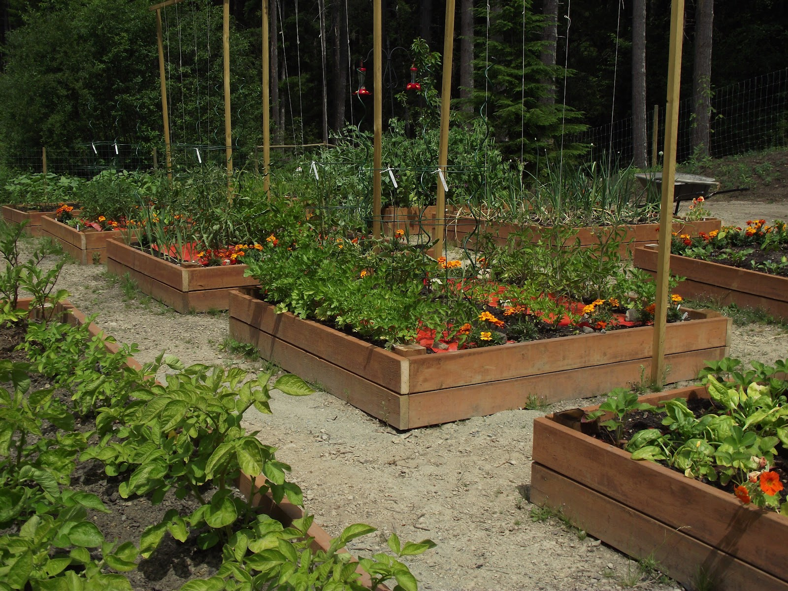 The Nitty Gritty Potager: For The Love of Potagers
