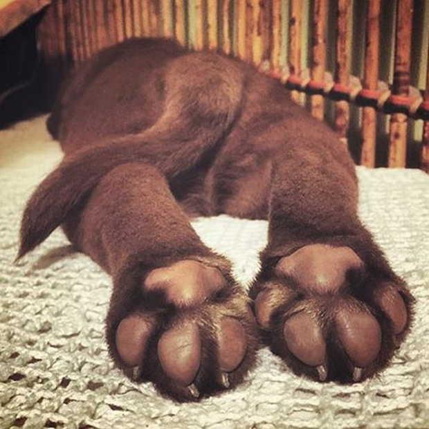 Cute Dogs Part 97 50 Pics Amazing Creatures