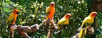 Jurong Bird Park Parrot