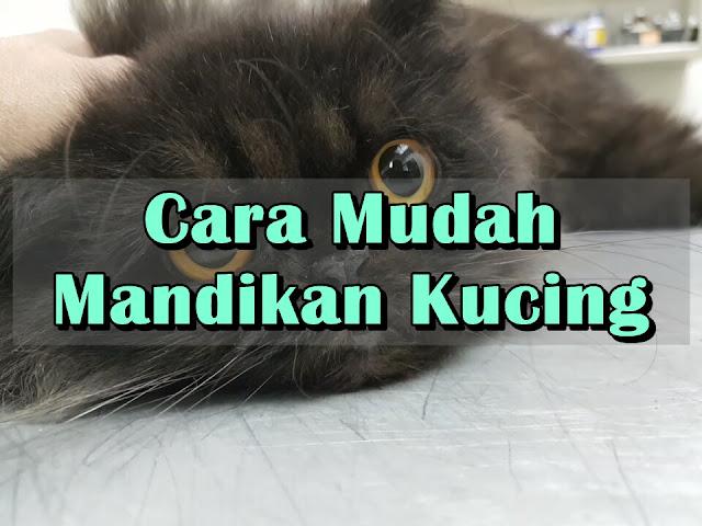 Cara Mudah Mandikan Kucing