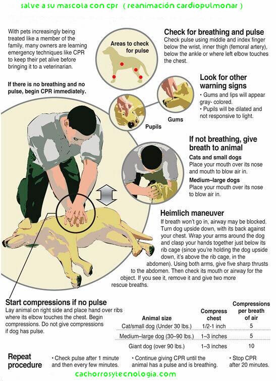 salvar un perro CPR Cachorros y tecnologia shurkonrad