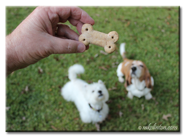 Pierre Westie and Bentley Basset Hound want a Vita Bone Artisan Inspired treat