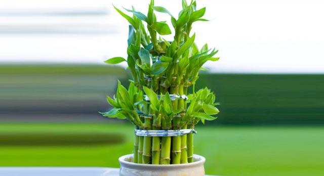 50 plantas que atraen energ as positivas seg n la - Energias positivas y negativas ...