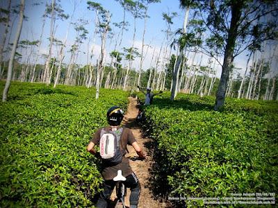 akcayatour, Agrowisata Wonosari, Travel Malang Semarang, Travel Semarang Malang, Wisata Malang